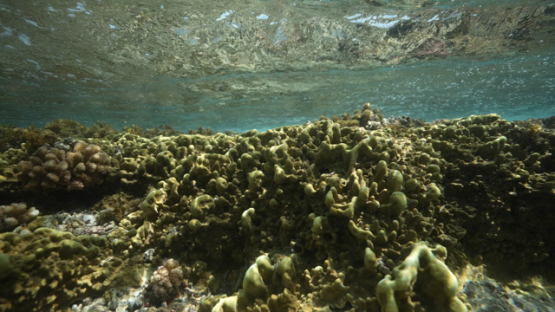 Tahiti, fire coral under wave and stream, slowmotion, 4K UHD