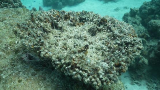 Tahiti, broken coral on the shallow reef, 4K UHD