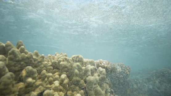 Tahiti, stream and foam over the corals in shallow reef, 4K UHD