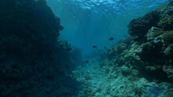Tahiti, coral reef from underwater, 4K UHD