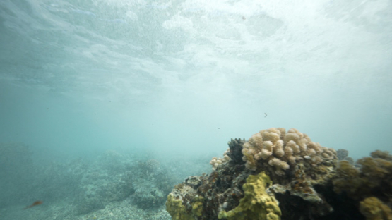 Tahiti, wave breaking over the corals in shallow reef with foam, 4K UHD