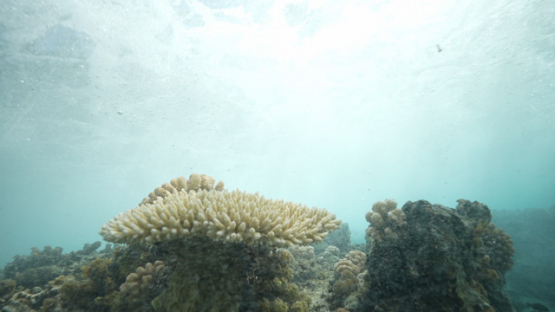 Tahiti, wave breaking over the corals in shallow reef, 4K UHD