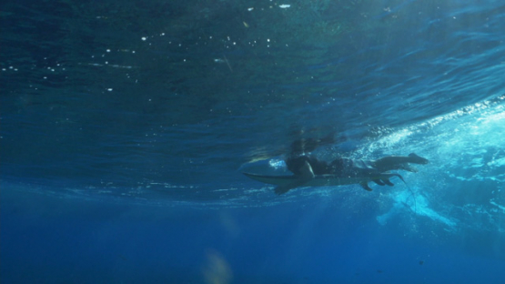 Tahiti, surfer and his board under the surface