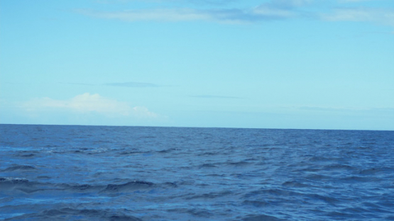 Tahiti, humpback whales, mother and calf at the surface, 4K UHD