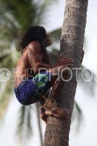Tahitian climbing on a coconut tree, Polynésien montant sur un cocotier